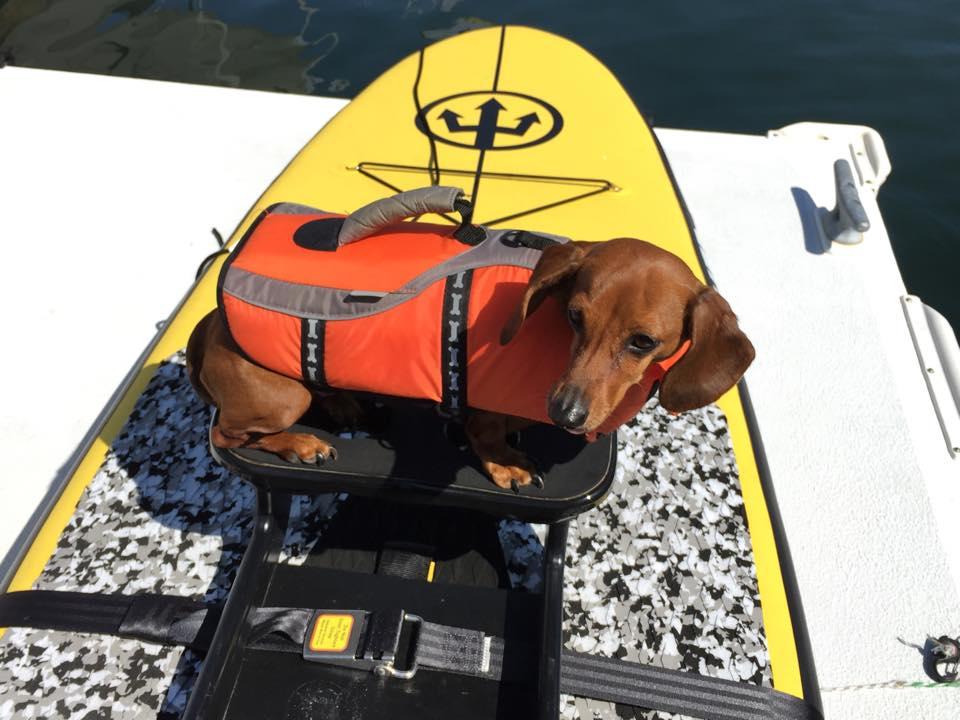 Belle-PFD-Oar-Board-Rower-Dogs-Rowing