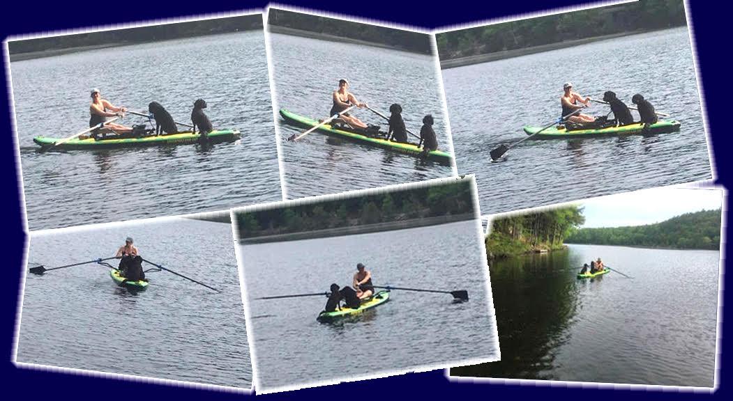 Multi-Oar-Board-Rowing-Dogs-SUP-Water-Lake
