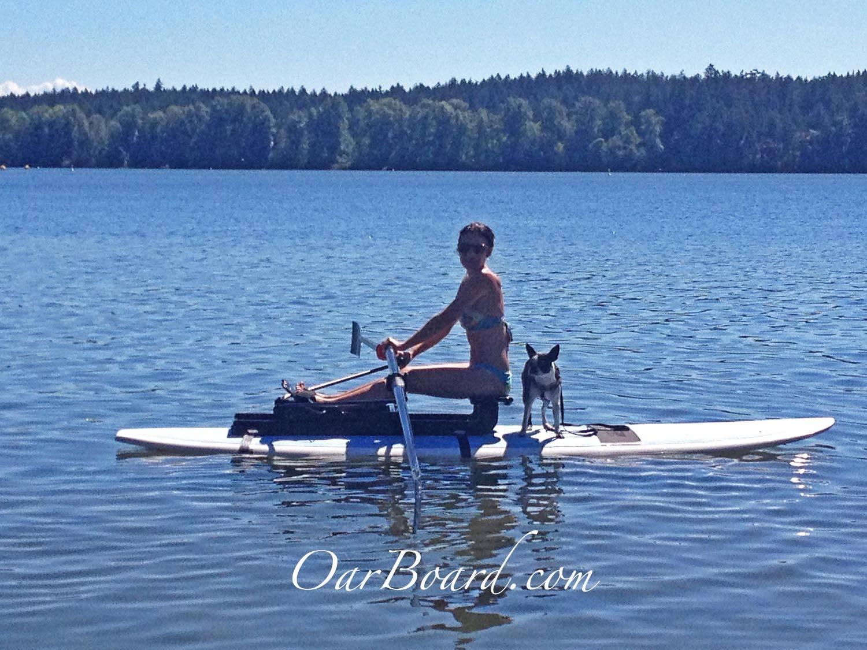 Oar-Board-Amber-Jordan-Boston-Terrier-Rowing